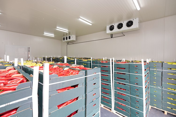 Stockage fruits et légumes dans une chambre froide
